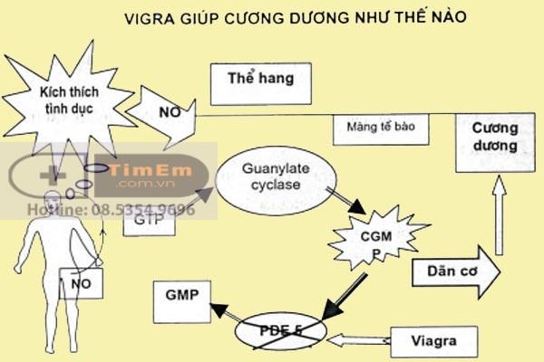 Viagra giúp cương dương như thế nào